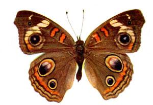 Butterfly/Flutterby...